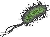 e coli in water - photo #6